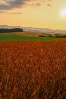 비 에이 赤麦 언덕 황혼 세로