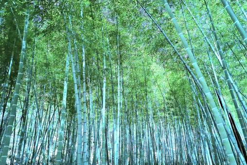 Bamboo Forest_bamboo