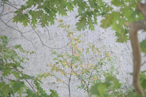 與白色岩石的樹木框架