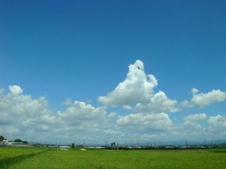 Summer clouds and rice field