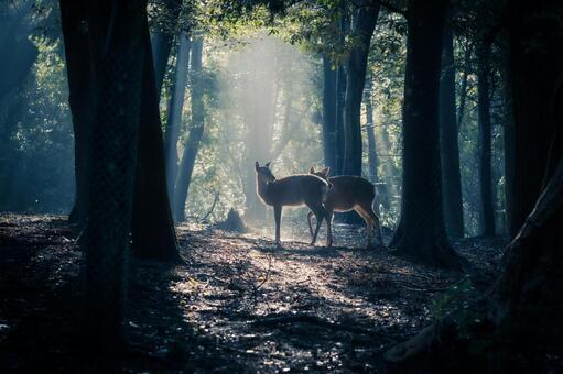 나라현 - 나라 공원 (히 히노) [새벽 사슴]