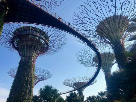 싱가포르 가든 스 바이 더 베이