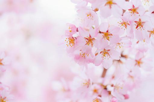 Cherry-colored background material