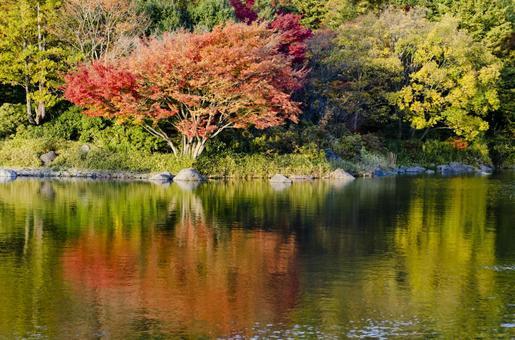 Fall scenery 8