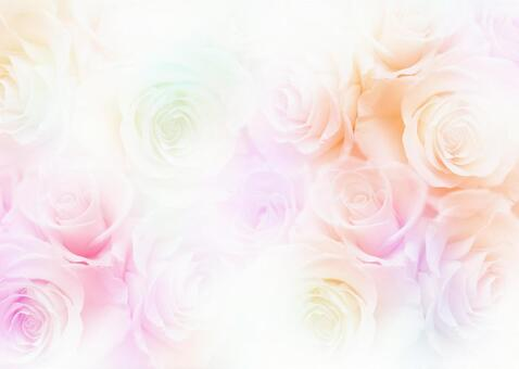 Roses _ pale background