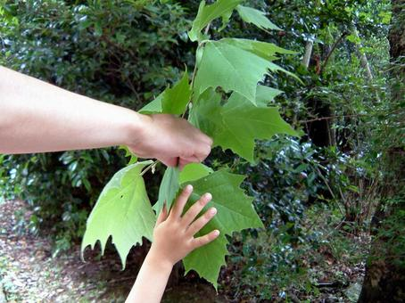 家长和孩子在自然中学习