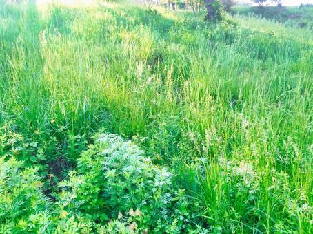 新鮮的綠草
