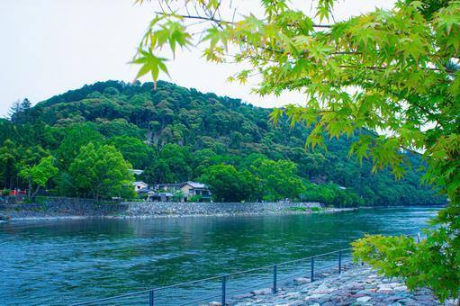 京都河沿岸的藍色秋葉