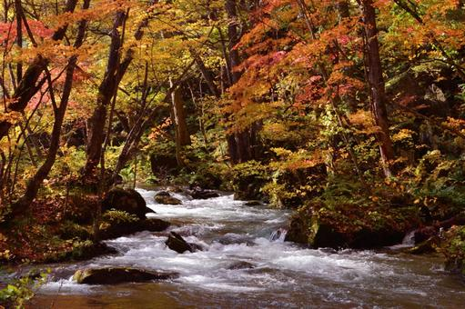 Autumn leaves of the Oirase Stream