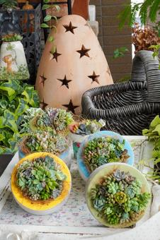 succulent plants