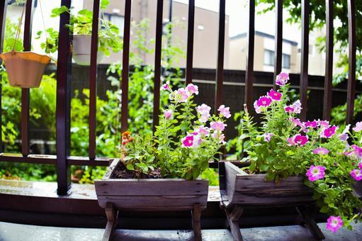 베란다 원예 꽃 피는 봄