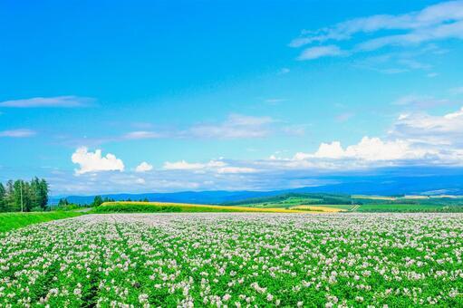 Hokkaido! Megumi of the land of Jushinooka!