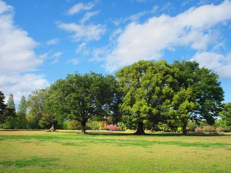 Park trees and blue sky