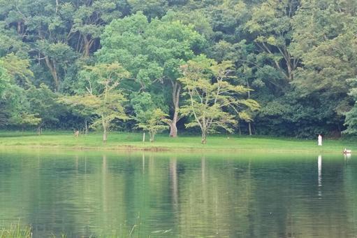 Summer scenery Cool breeze Lake Ippeki Izu's eyes Reflection Ripples Ripples