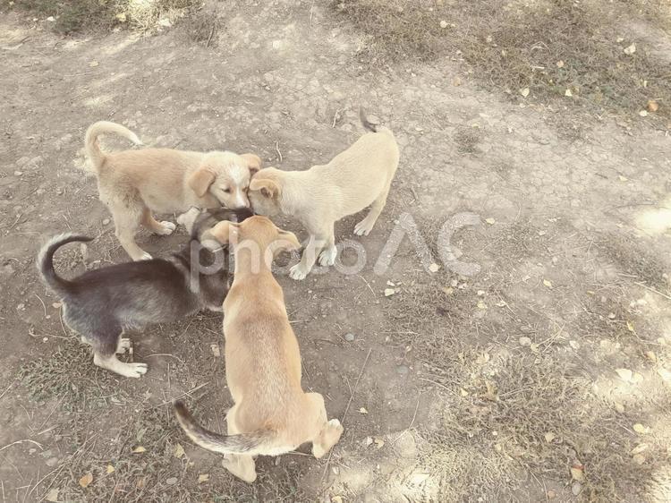 子犬の遊びの写真