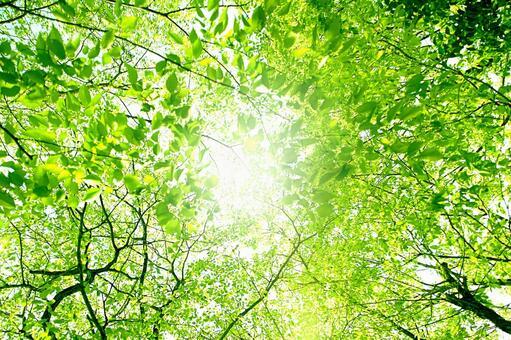 Sunlight sunbeams