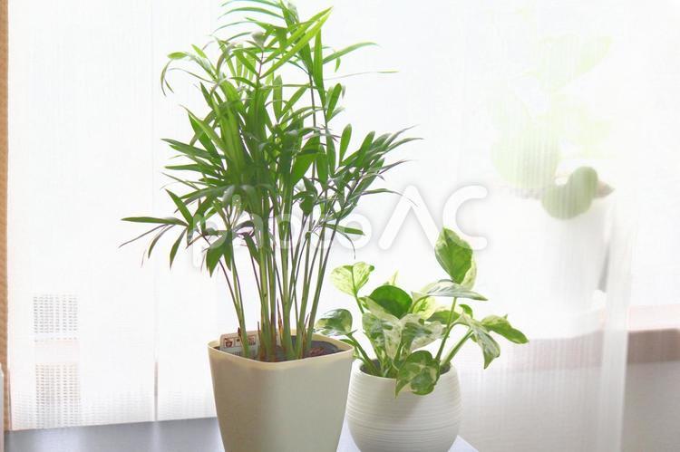 爽やかな観葉植物の写真