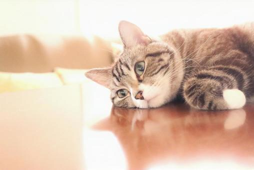 I'm thinking about a cute tabby cat I'm worried about