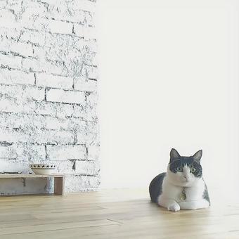 고양이의 아침 1