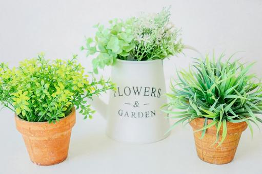 Heal with foliage plants
