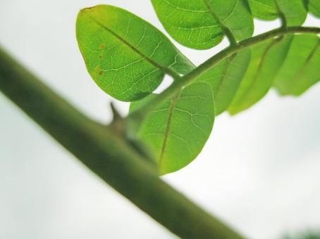 녹색 덩굴 잎 14