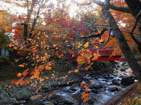 Autumn leaves of Shuzenji River