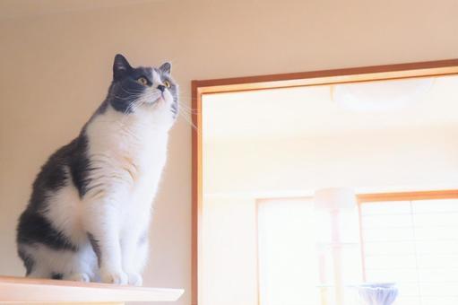一隻可愛的Hachiware貓盯著頂部的壁紙