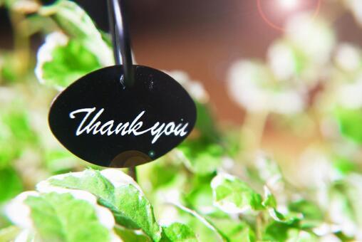 Thank you (Thanks) | Houseplant