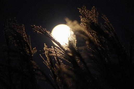 Mid-autumn Moon and Susuki