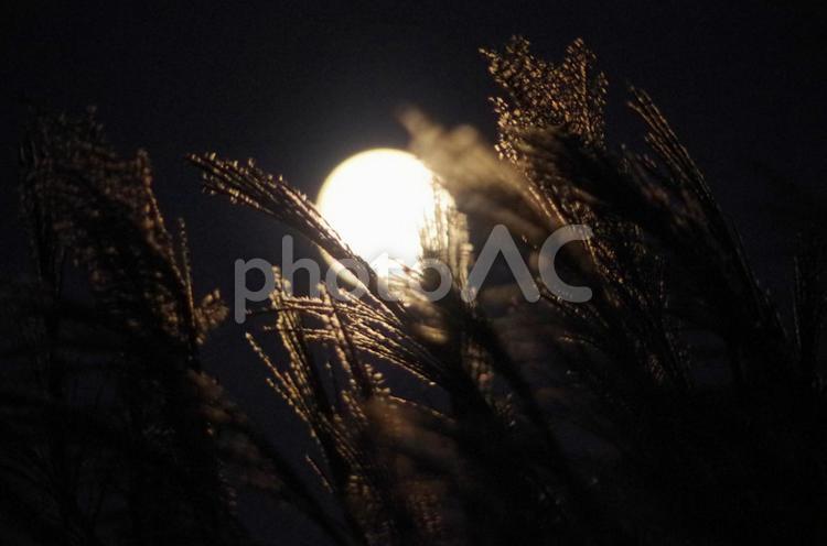 中秋の名月とススキの写真