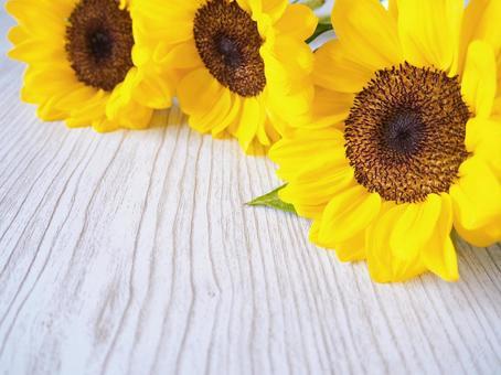 Sunflower wood grain background frame