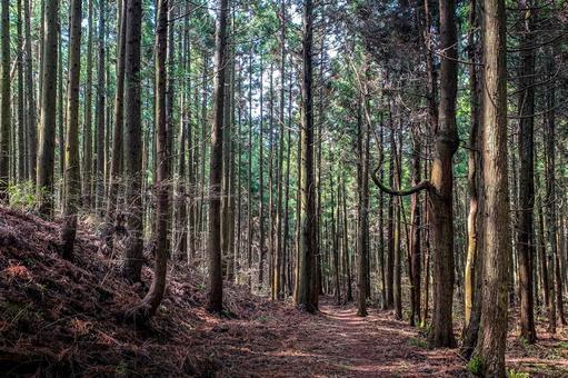 Vegetation forest