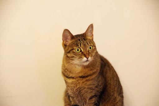 Question cat lacco 1