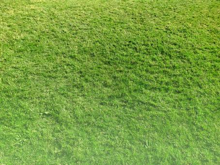 Grass 05 no light