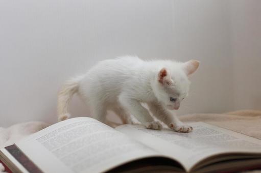 Research hardy kitten