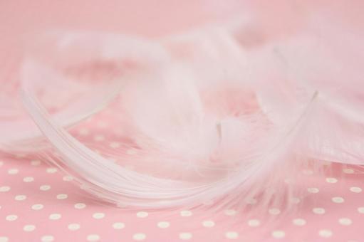 White Feather 4