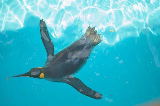 Oustama Penguin 2