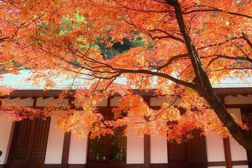 Maple autumn leaves maple autumn autumn background