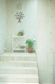 Ornamental plants placed on shelves 3
