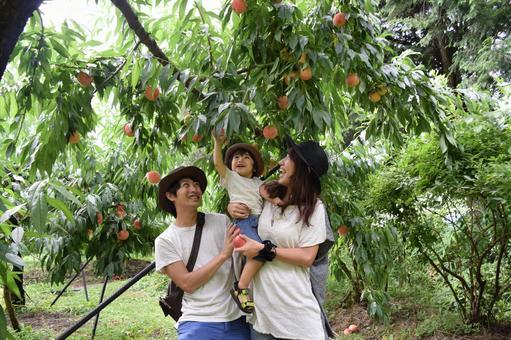 Parents enjoying peach hunting