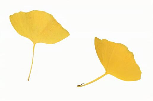Cut-out stock photos Falling leaves 10