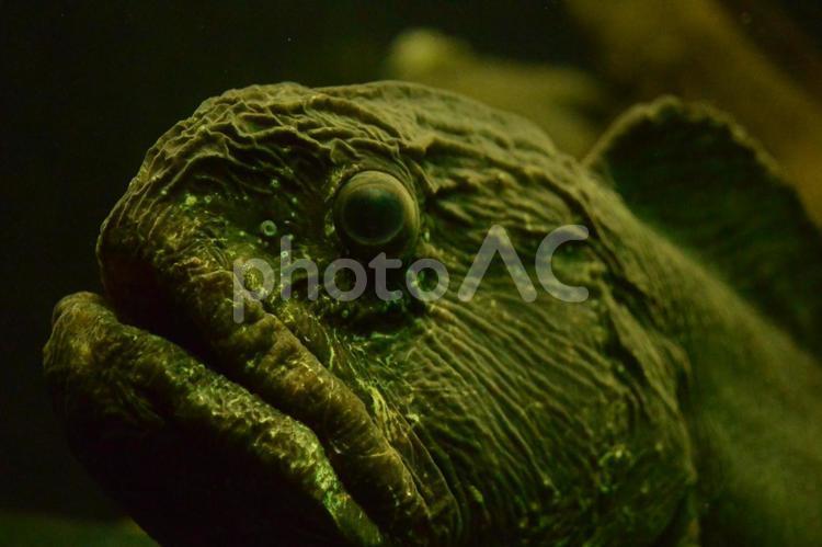深海魚の顔の写真
