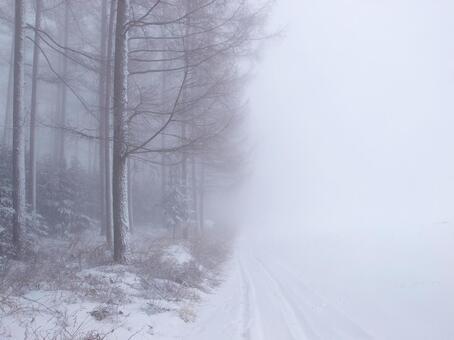 冬天防风林