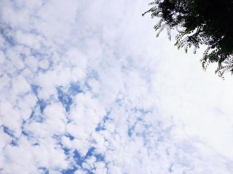 Fluffy cloud sky and trees | Copy space background wallpaper