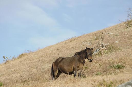 Wild horse 9