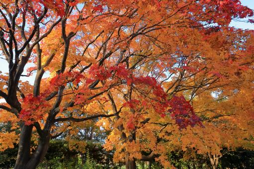 Yurigahara Park dyed in autumn colors and bright red