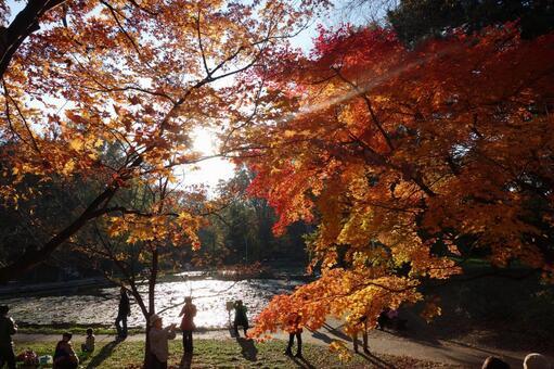 Hokkaido University pond