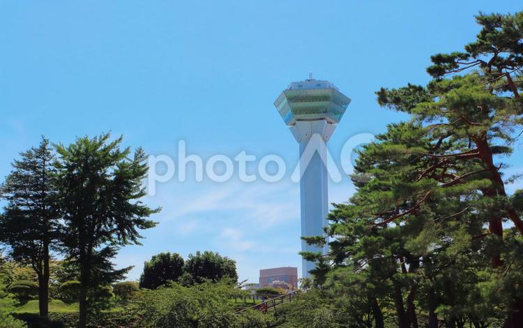 函館、五稜郭公園、タワーの写真
