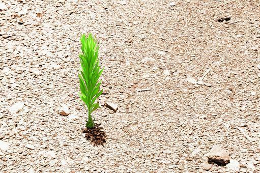 Summer grass of dry ground # 6