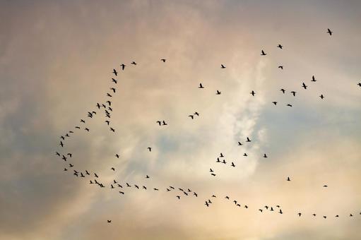 석양 하늘을 나는 철새